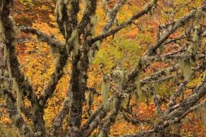 Inventario de flora y vegetación - Líquenes - Usnea sp