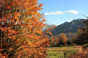 Inventario de flora y vegetación - Bosques naturales - Hayedo de Peloño